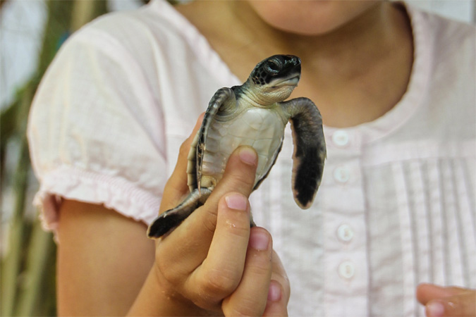 turtle_4