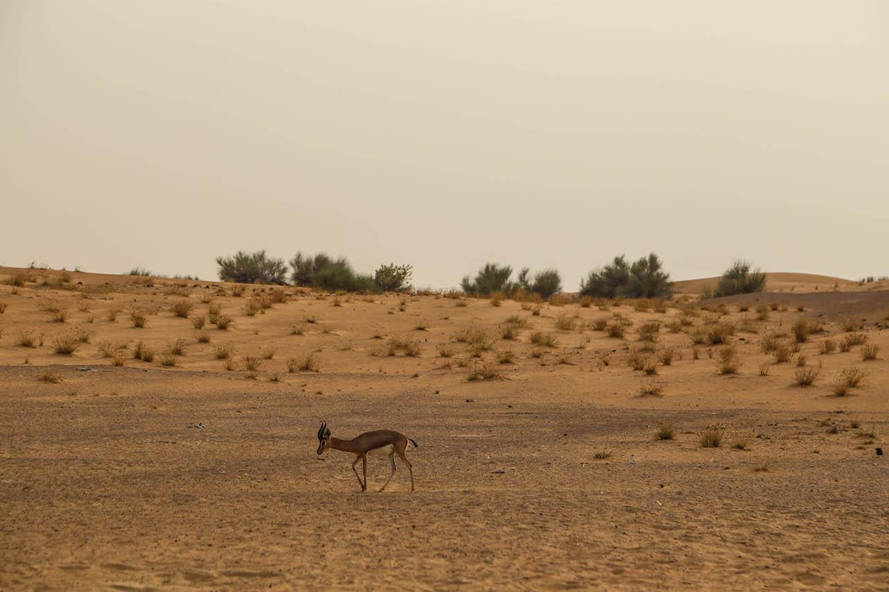 Dubai_7882